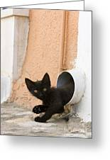 Kitten In A Pipe Greeting Card
