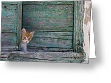 Kitten Peeking Out Greeting Card