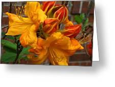 Klondyke Azalea Greeting Card