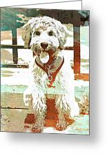 Labradoodle-wc 2 Greeting Card