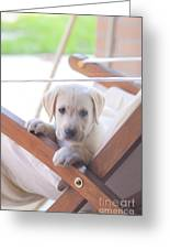 Labrador Greeting Card