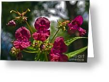 Lady Slipper Orchid Dan146 Greeting Card