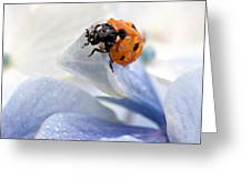 Ladybug Greeting Card by Nailia Schwarz