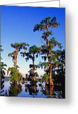 Lake Martin Cypress Swamp Greeting Card