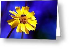 Lakeside Daisy Greeting Card