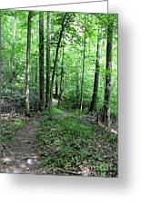 Lakeside Trail Winding Path - Yellowwood Lake Greeting Card