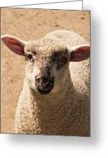Lamb Looking Cute. Greeting Card