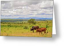 Landscape In Malawi Greeting Card