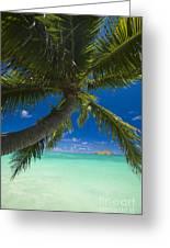 Lanikai Palm Tree Greeting Card