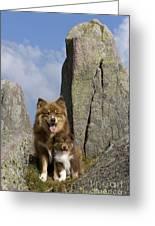 Lapinko�ra Dog And His Pup Greeting Card