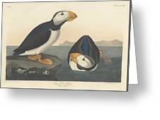 Large-billed Puffin Greeting Card