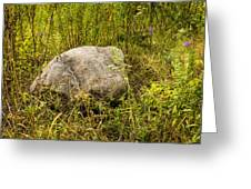 Large Rock And Purple Asters Greeting Card