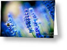 Lavander Flowers With Bee In Lavender Field Artmif Greeting Card by Raimond Klavins