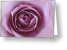 Lavender Of Rose Greeting Card