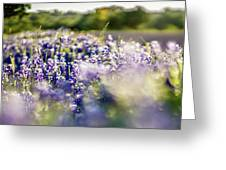 Lavender Purple Flower Blooming On Side Road In Texas At Sunset Greeting Card