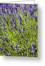Lavender Scent Greeting Card