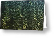 Leaf Of The Ivy   Greeting Card