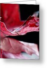 Leaf Study V Greeting Card