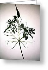 Leafcarving Greeting Card