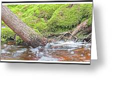 Leaning Tree Trunk By A Stream Greeting Card