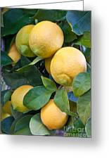 Lemon Tree Greeting Card