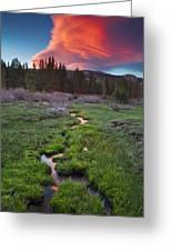 Lenticular Meadow Greeting Card