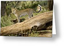 Leopard In The Forest Greeting Card