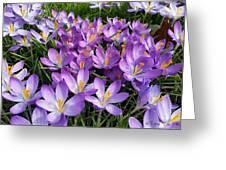Let It Spring Greeting Card