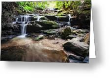 Leura Cascades - Blue Mountains, Australia. Greeting Card