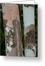 Lichen On The Trees At The Coba Ruins  Greeting Card