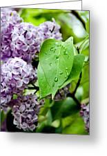 Lilac Drops Greeting Card
