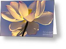 Lilies Of The Water V Greeting Card
