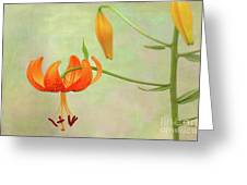 Lilium Pardalinum Greeting Card