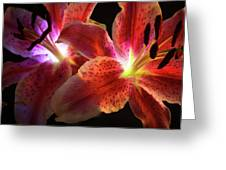 Lilly 001 Greeting Card