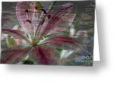 Lily Blossom Greeting Card