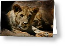 Lion Cub Greeting Card