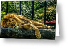 Lion Relaxing Greeting Card