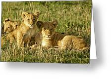 Little Lions Greeting Card