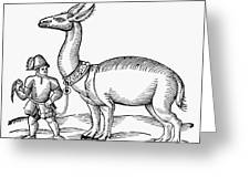 Llama, 1607 Greeting Card