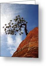 Lone Bonsai Tree In Zion Greeting Card