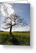 Lone Oak Tree In English Countryside Greeting Card