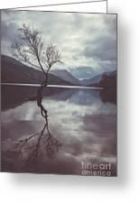 Lone Tree At Llyn Padarn Greeting Card