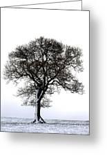 Lone Tree In Field Greeting Card by John Short