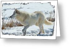 Lone White Wolf Greeting Card