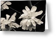 Long Petals Greeting Card