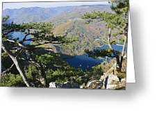 Look At The Pine Trees And The Lake Greeting Card