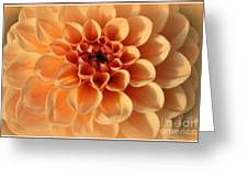 Lovely In Peaches And Cream - Dahlia Greeting Card