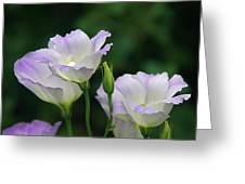 Lovely Lisianthus Greeting Card