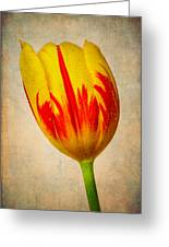 Lovely Textured Tulip Greeting Card