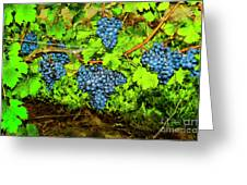 Lucious Grapes Greeting Card